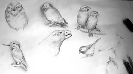 Birds 2 by Leona-Norten