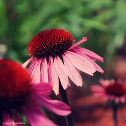 Garden by FreshIsrael