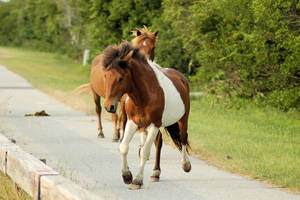 Horse Stock 004 by Jaded-Night-Stock