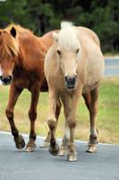 Horse Stock 009 by Jaded-Night-Stock