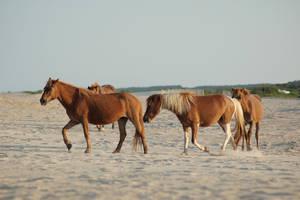 Horse Stock 10 by Jaded-Night-Stock