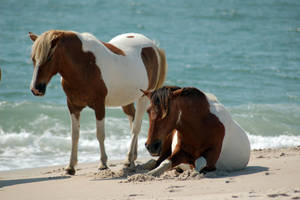 Horse Stock 12 by Jaded-Night-Stock
