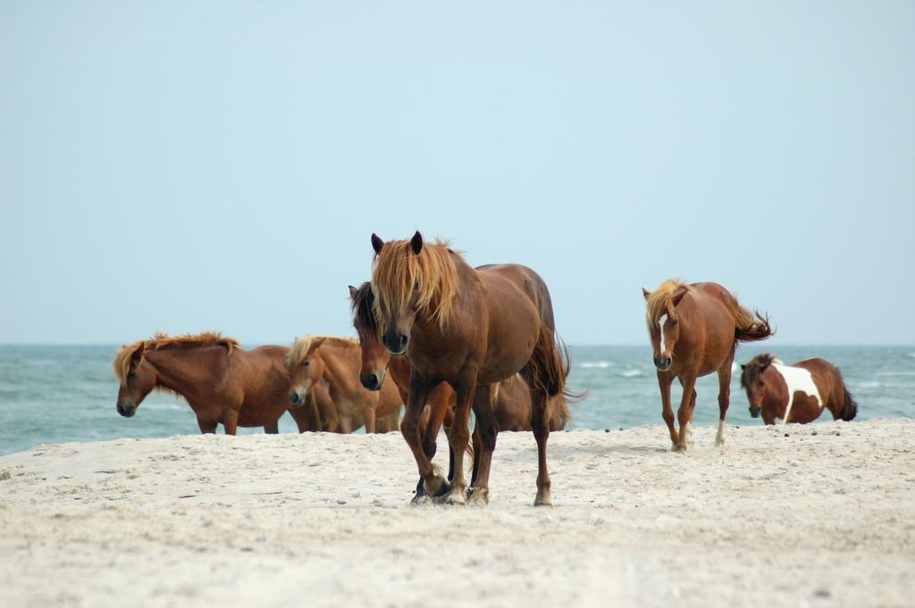 Horse Stock 18 by Jaded-Night-Stock