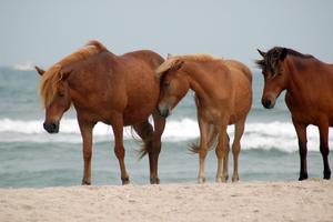 Horse Stock 22 by Jaded-Night-Stock
