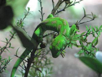 Green Gecko by Cybogoblin