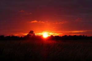 Sunset by firefly31