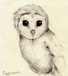 A barn owl by LiluAmber