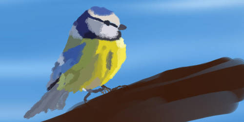 Blue Tit by ChristopherBoland
