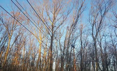 Sunlit Trees by ximeremix