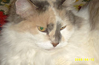 Our cat by Elanka