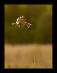 Long Eared Owl by q-118