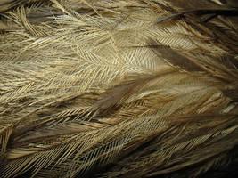Emu Feathers Macro by kayne-stock