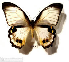 butterfly 5 by kayne-stock