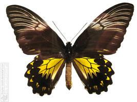 butterfly 6 by kayne-stock