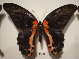 butterfly 9 by kayne-stock