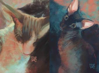 pretty kittens by revioLATE