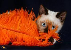 the orange feather cat by Kirikina