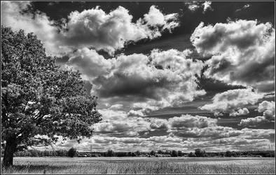 Tree by ari13