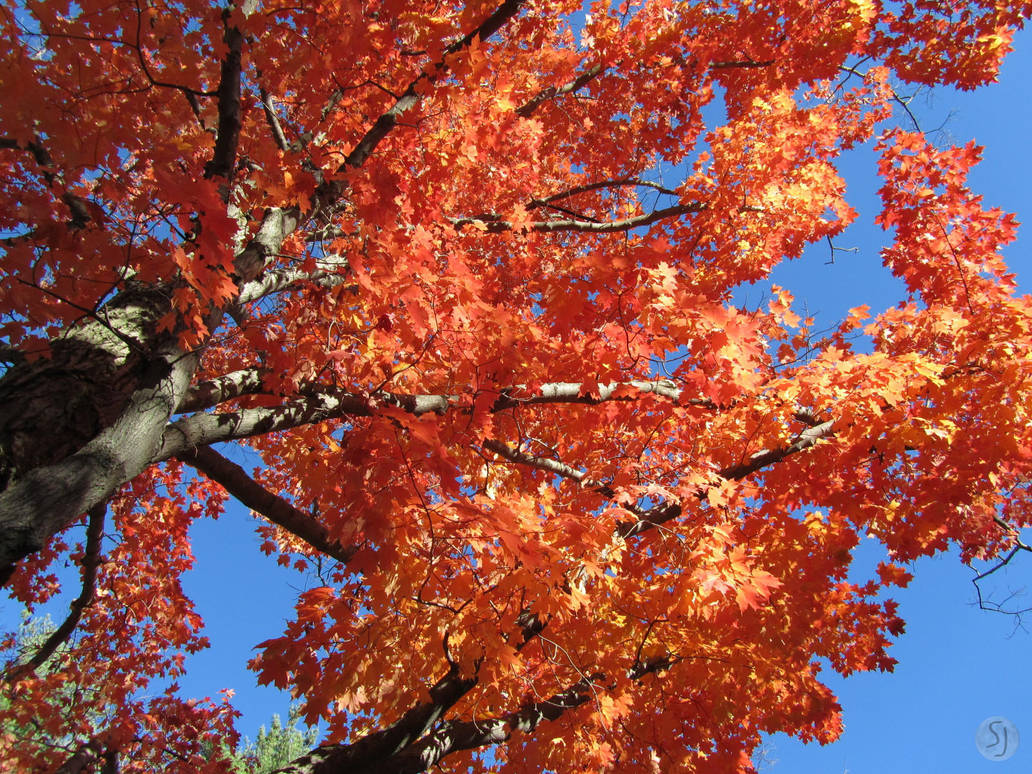 High Red Boughs by KamiMusubi
