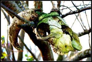 A Skull by NikolaRoyale