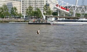 Thames bird 2 by d3lf