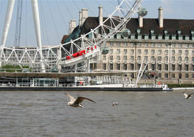 thames birds 3 by d3lf