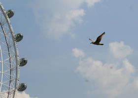 LOndon Eye Bird by d3lf