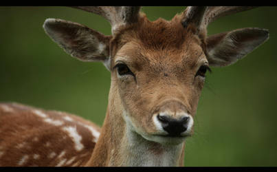 Doe-eyed Stag by d3lf