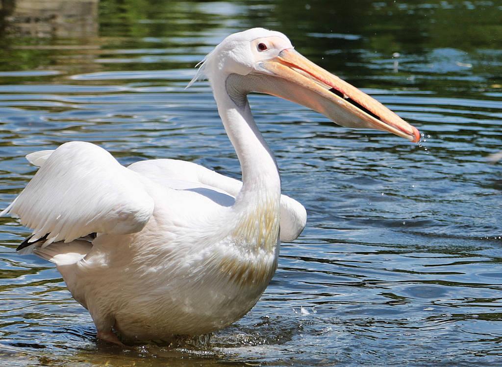 Pelican v Babyduck II by d3lf
