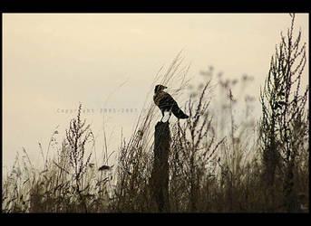 Crow by AlexEdg