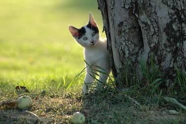 Kitten. 01 by AlexEdg