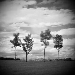 Trees by AlexEdg