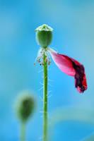 petal by AlexEdg