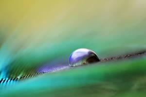 droplet 06 by AlexEdg