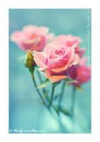 Roses-Lensbaby Composer - I by AlexEdg