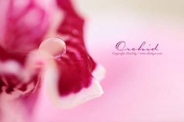 Orchid Cymbidium - III by AlexEdg
