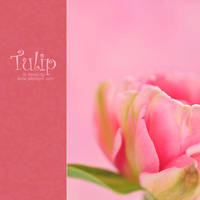 Tulip - II by AlexEdg