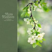 Plum Blossom by AlexEdg