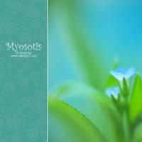 Myosotis by AlexEdg
