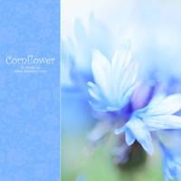 blue cornflower by AlexEdg