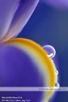 droplets 018 by AlexEdg