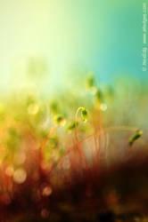 Moss. 02 by AlexEdg
