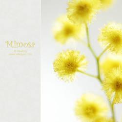 mimosa - III by AlexEdg