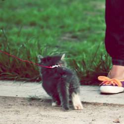 Kitten. 03 by AlexEdg