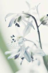 Scilla by AlexEdg