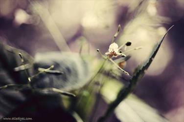 Untitled. 058 by AlexEdg