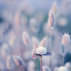 wild flowers. 01 by AlexEdg