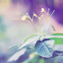 wild flowers. 02 by AlexEdg