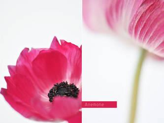 Anemone by AlexEdg