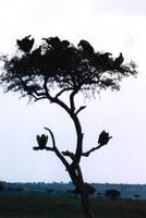 Tree Full of Death by Shawana